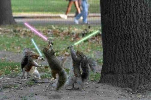 Squirrel-battle-cute-pictures