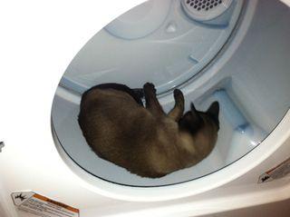Kwinn Cat in Dryer 2