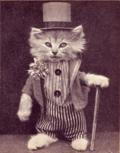 Rich-Cat1