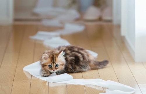 Adorable_Kitten