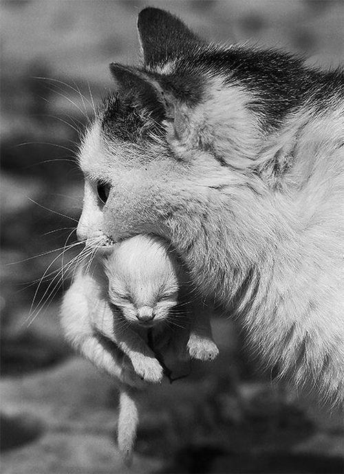 Mama_and_kitten